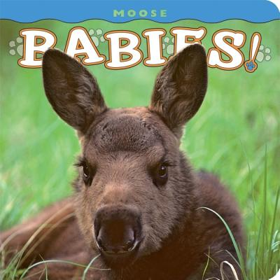 Moose Babies By Holdsworth, Henry H. (PHT)